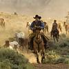 Wrangling the Horses At Sunrise at Absaroka Ranch, Wyoming