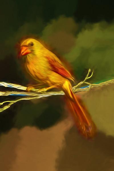 Female Cardinal with Art