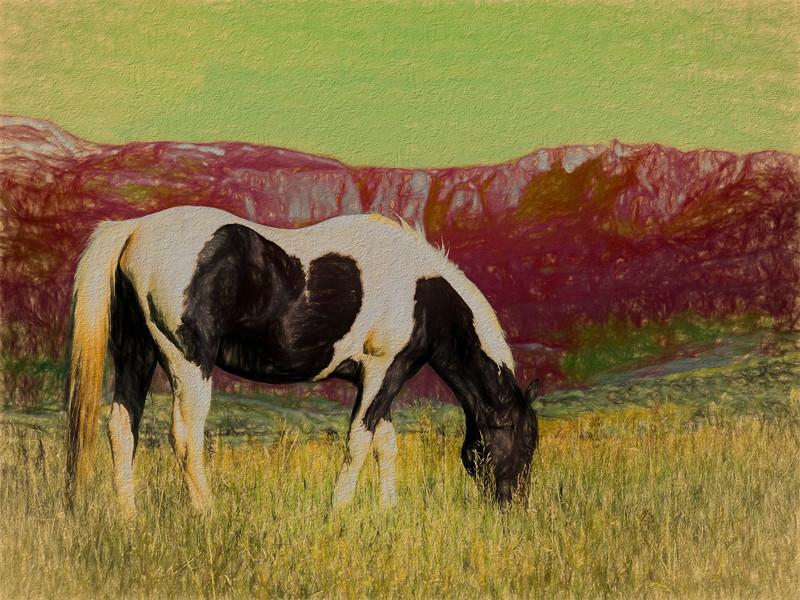 Horse on Mars