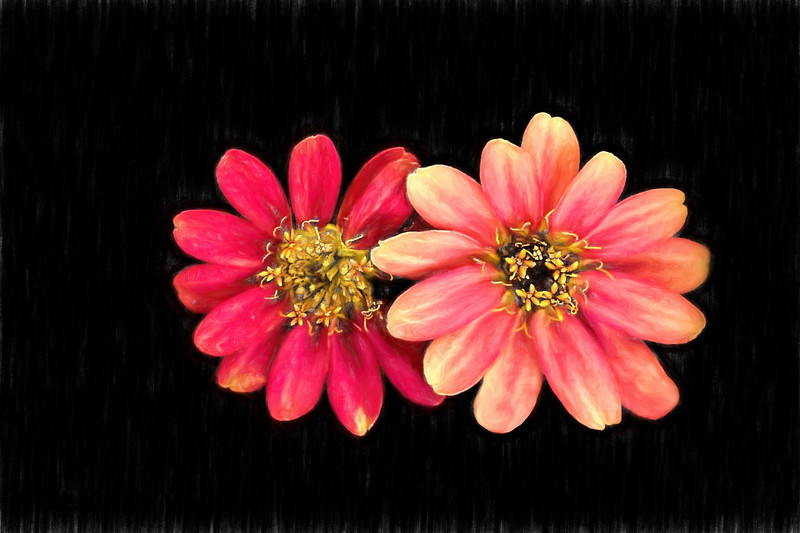 Zinging Zinnia Art 1