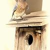 Bluebird Fadeout