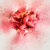 Gentle Camellia
