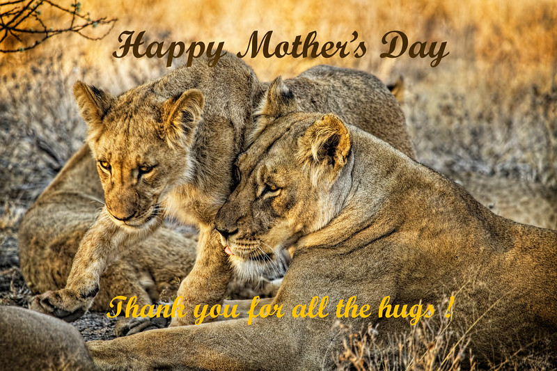 Mother's Day Card with Lions