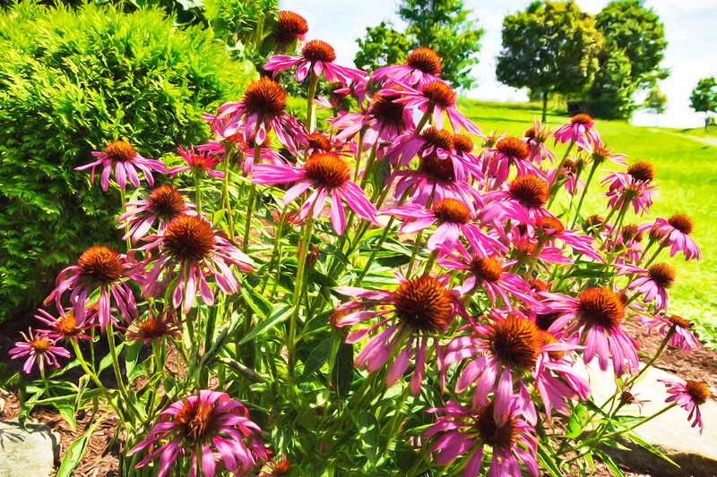Cone Flower Bouquet