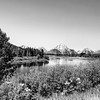 Yellowstone National Park in Black and White