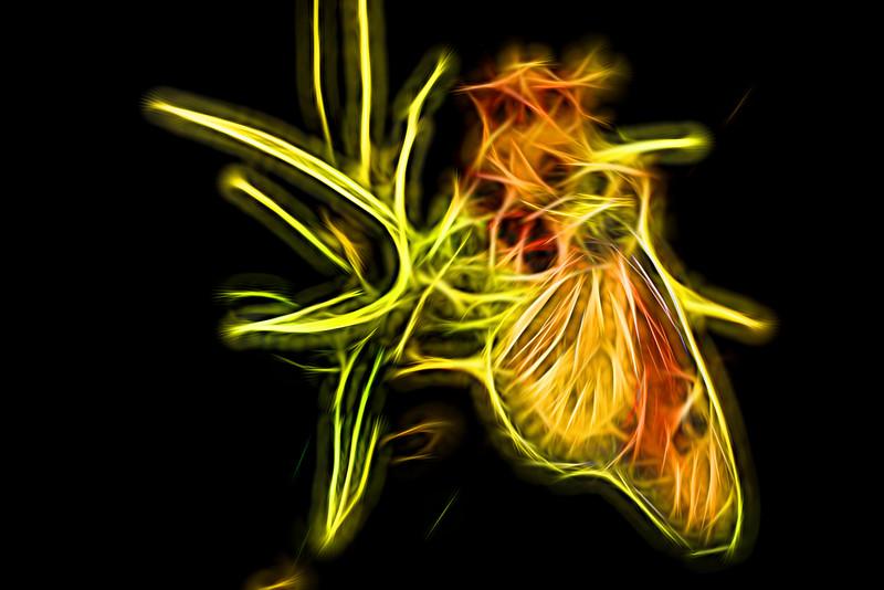 Monarch Butterfly Art 11