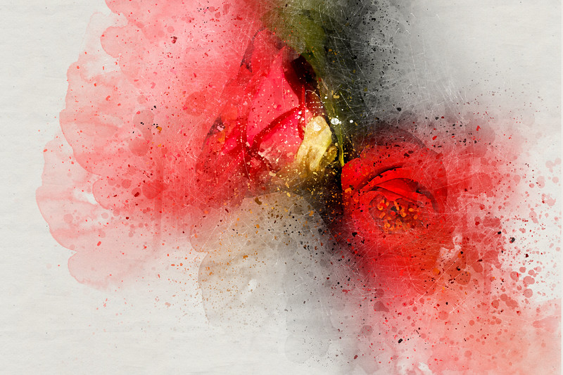 Camellia Burst