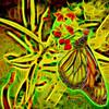 Monarch Butterfly Art 8