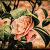 Camellia Grunge