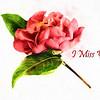 I Miss You Camellia