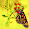 h Butterfly Abstract Sketch