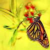 Monarch Butterfly Art 6