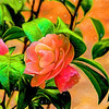 Camellia with Art