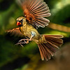 A Cardinal Approaches