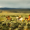 Returning To The Stable At Absaroka Ranch, Wyoming