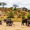 Elephant Drill