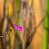 A Wildflower in the Delta