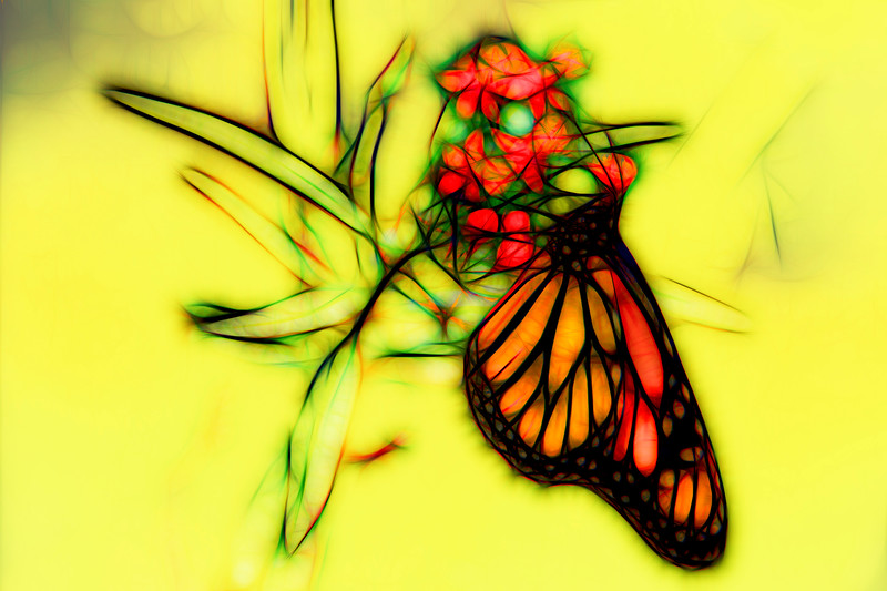 Monarch Butterfly Art 10