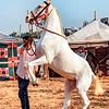 The Mawari Horse