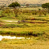 Tanzania Animal Landscape