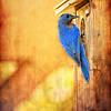 Daddy Blue Bird with Art
