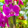 Orchid Pointilism