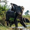 Protective Mama Elephant