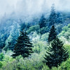 Verdant Forest in the Great Smoky Mountains