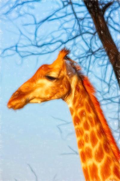 A Painterly Giraffe