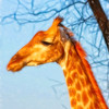 A Painterly Giraffe
