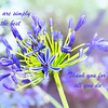You're Simply the Best Agapanthus Greeting Card