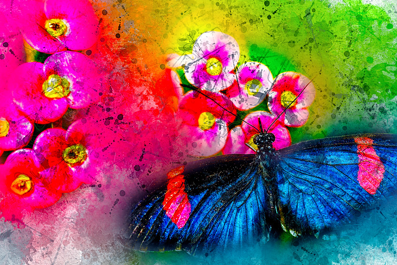 Butterfly Color Explosion