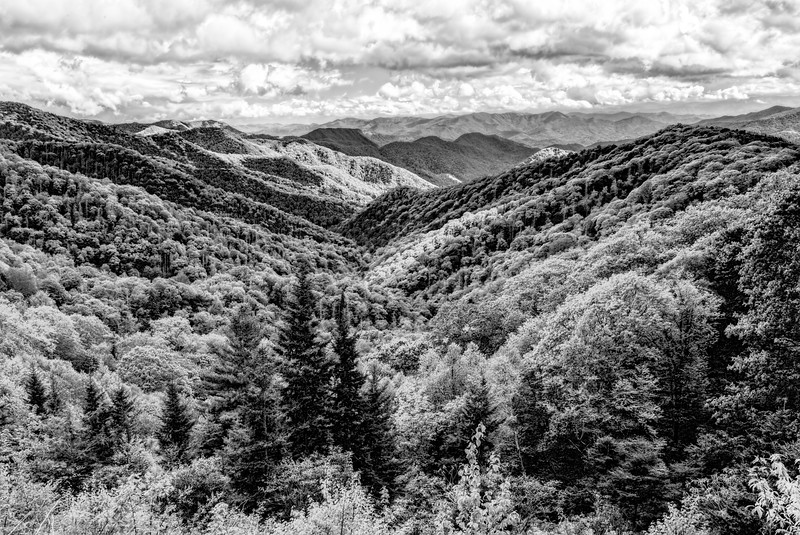 Autumn in the Smoky Mountains in Black and White