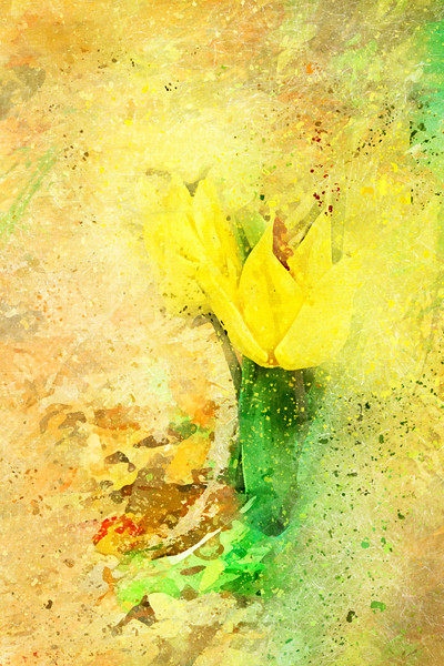 Yellow Tulip Scatter
