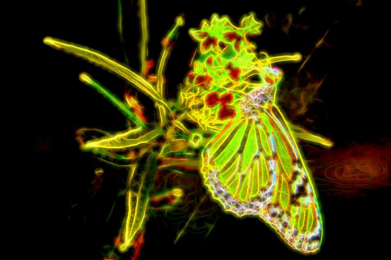 Monarch Butterfly Art 9