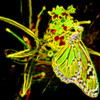 Monarch Butterfly Art 9