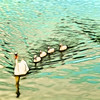 Swan Family Aglow