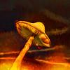 Mushroom On Fire
