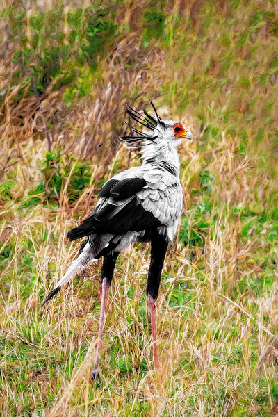 The Quirky Secretary Bird