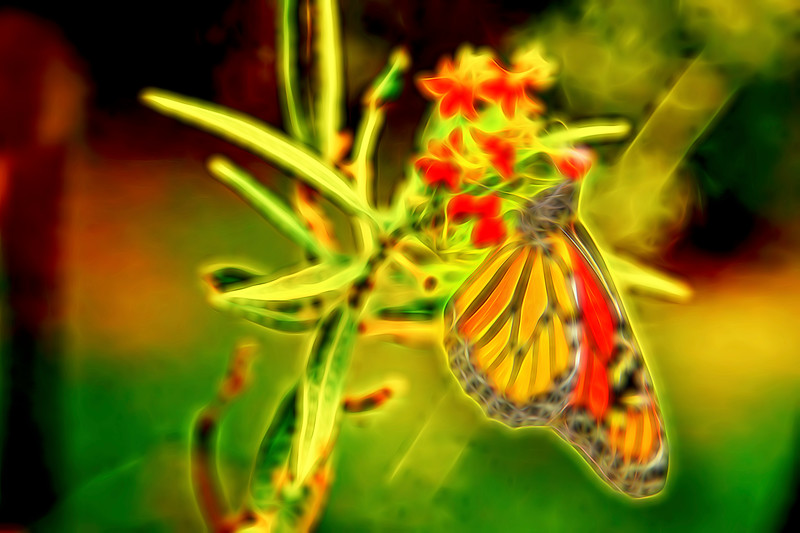 Monarch Butterfly Abstract 1