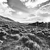 Absaroka Mountains Sunrise in the Spring in Black and White