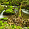 Streams of the Smoky Mountains
