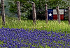 TX Chappell Hill Texas gate and bluebonnets