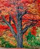 AR Eureka Autumn old timer