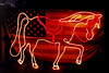 TX Magnolia Lighted horse and American flag on fence at dawn lite by car lights.
