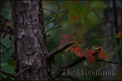 Stylized photos of The Woodlands, Texas