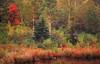 ME 1996 Acadia autumn colors