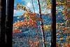 VT 1987 autumn leaves