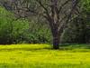 TX 2016/04 Washington County Yellow shag carpet