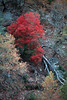 TX 1980 Lost Maples State Park bright red